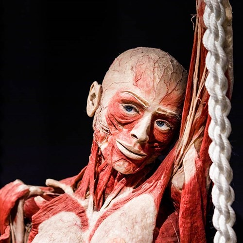 2018_tgi_body_worlds_2.jpg